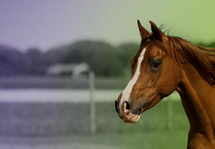Horse Loan Equine Financing Lightstream
